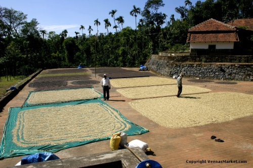 coffee beans drying in sun