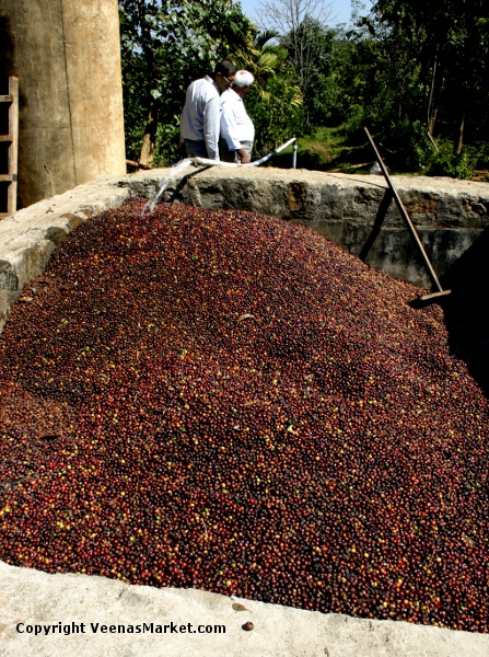 coffee berries are washed