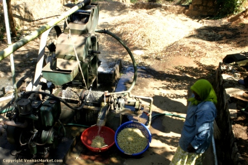pulping machine that removes skin from coffee berries