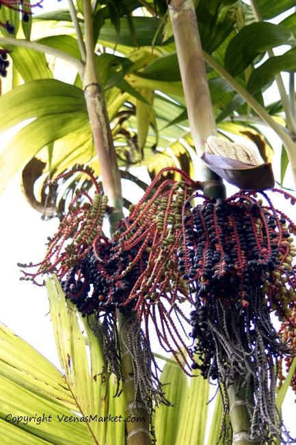 palm tree braids